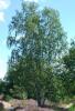 "image for Nature Reserve ""Grote en Kleine Nete"""
