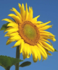 image for Stiftung Pflanzen für Menschen